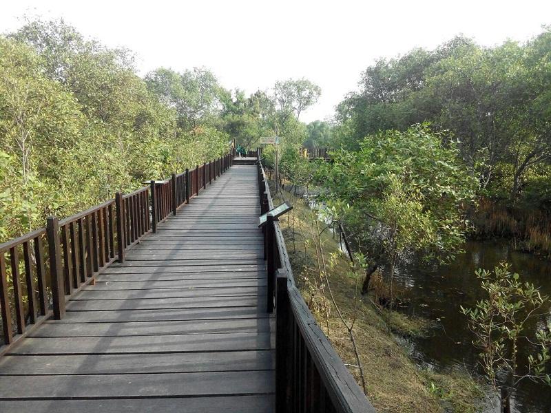 Wisata Hutan Mangrove Surabaya