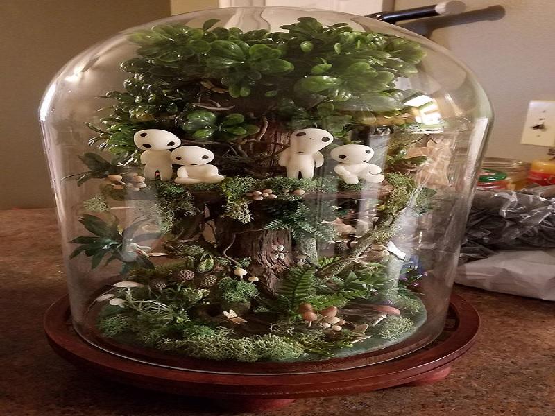 ide membuat terarrium herbal untuk ruang tamu