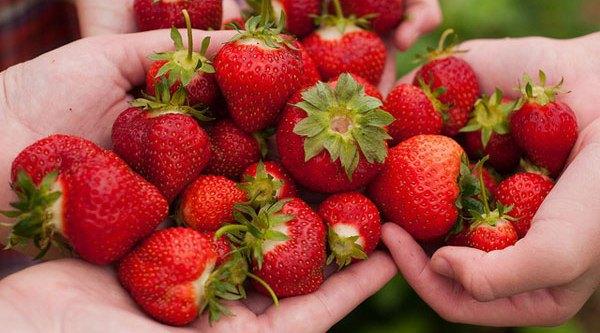 Manfaat buah dan jus strawberry untuk kulit