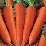 Jenis Sayuran Sehat Dan Bergizi - Wortel