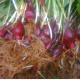 bawang tiwai