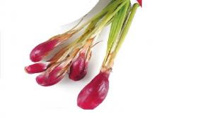 tanaman bawang tiwai