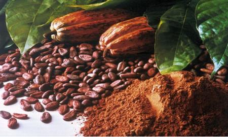kakao mentah dan bubuk