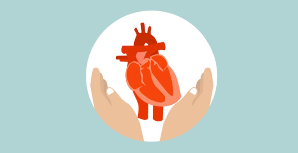Batal sehat, ini pengaruh kolesterol baik buat jantung
