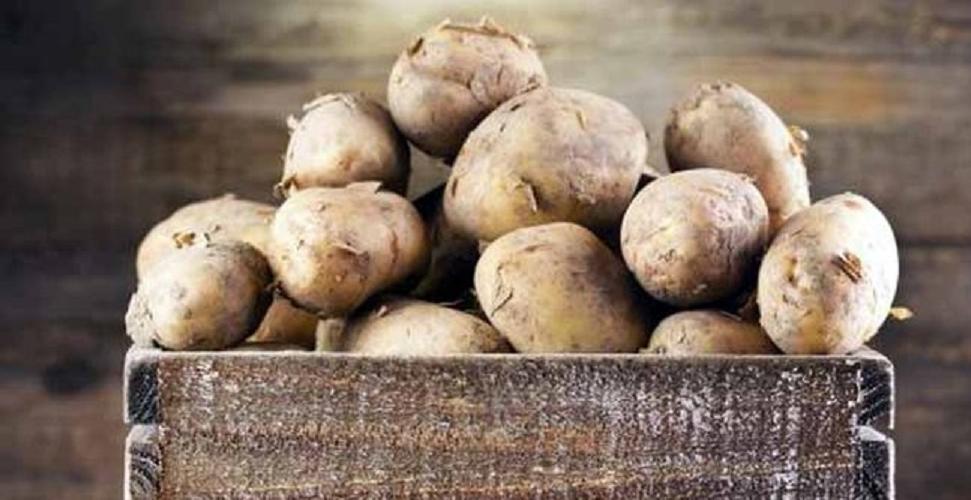 Jangan menyimpan kentang di kulkas! Ini alasannya