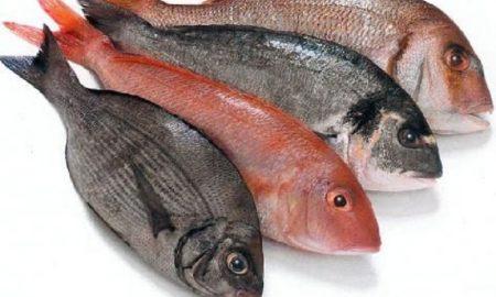 Cara Tepat Membeli dan Memilih Ikan Segar