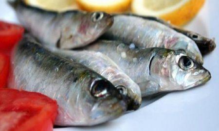Ternyata Ikan Sarden Sangat Sehat untuk Tubuh