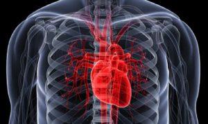 Hal Paling Penting untuk Menjaga Kesehatan Jantung