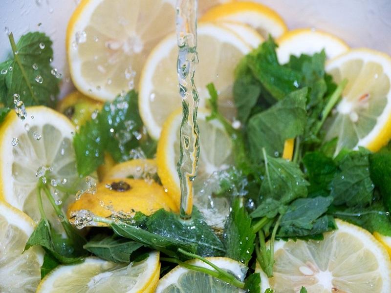 Mengenal Tanaman Lemon Balm dan Manfaatnya untuk Kesehatan