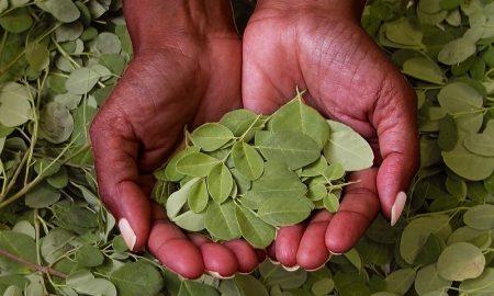 Herbal untuk Meningkatkan ASI