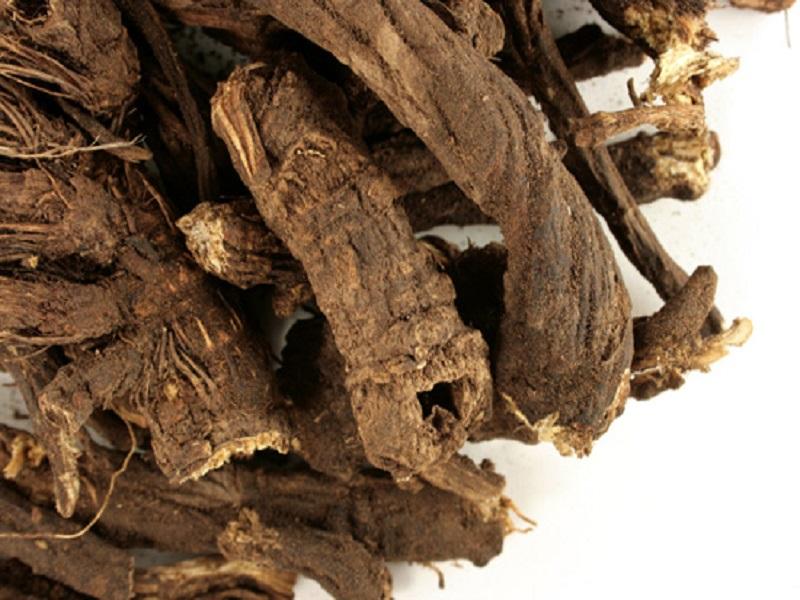 Manfaat Akar Osha Sebagai Herbal Ampuh dan Alami