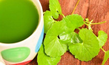 Herbal untuk Menjaga Kesehatan Otak