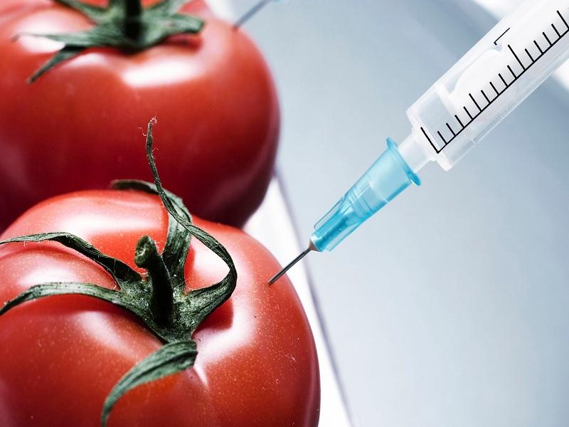 Daftar Makanan Sehat yang Pernah Melewati Proses RekayasaGenetik