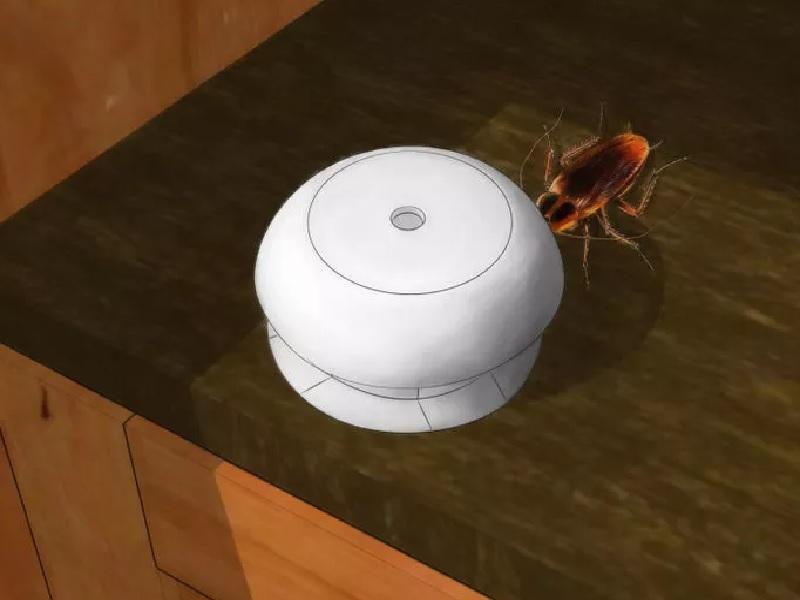 Cara Mengusir Kecoa Dari Rumah