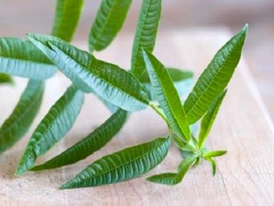 Awas Ini Khasiat Terbaik Herbal Daun Lemon Verbena.2