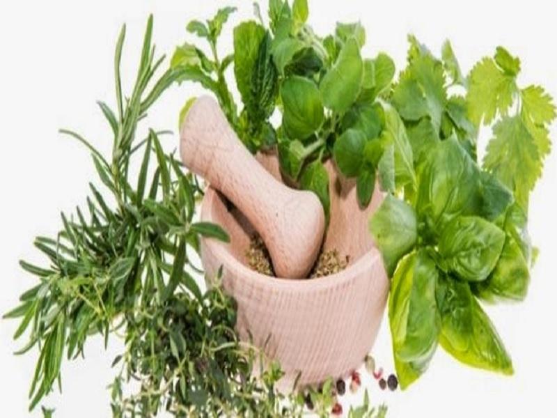 Daun Herbal Hijau Paling Sehat untuk Tubuh