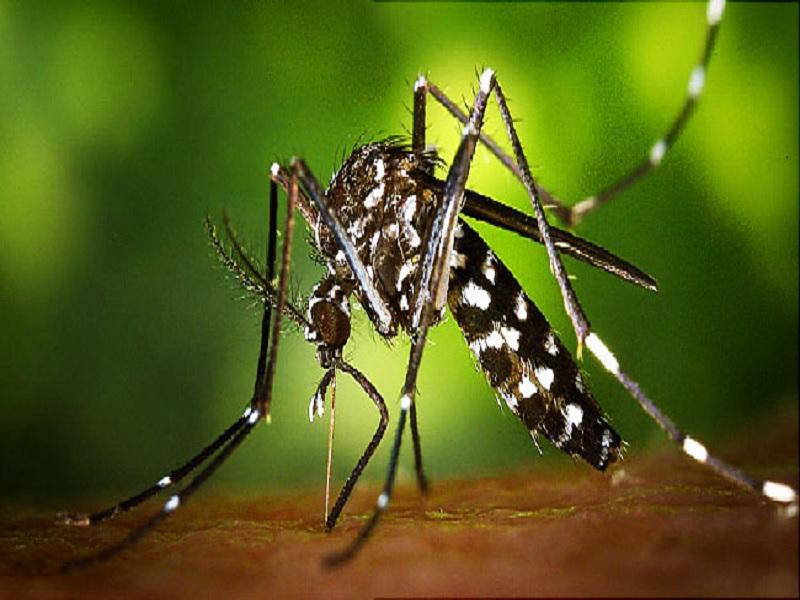 Fakta Virus Zika yang Wajib Diketahui