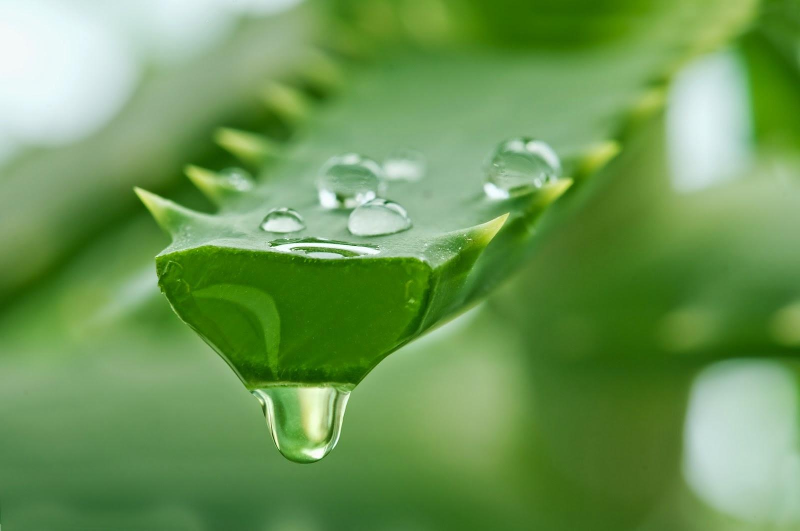 Herbal Ampuh untuk Menyembuhkan Herpes