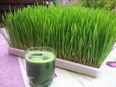 Manfaat Mengejutkan Mengkonsumsi Wheatgrass Secara Rutin.2