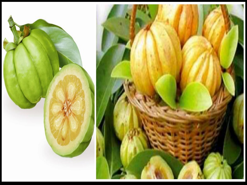 Mengenal Herbal Garcinia Cambogia untuk Kesehatan Tubuh