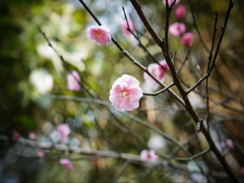 bunga apa yang bisa membuat Anda cantik