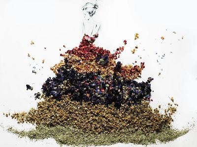 petunjuk mengeringkan herbal untuk bumbu dan hiasan