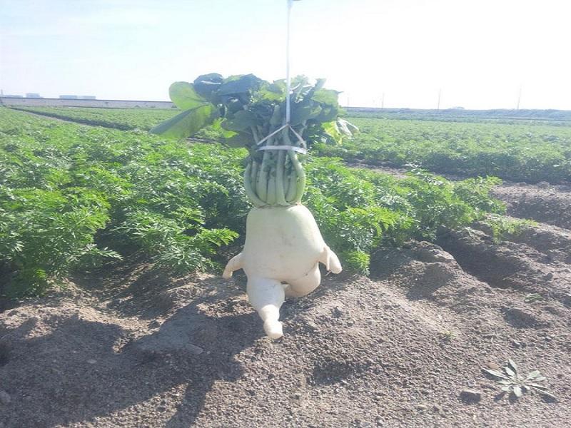 sayuran dan buah berbentuk paling aneh