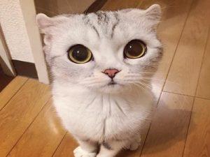 Apakah ada dampak kucing bagi kesehatan