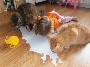anak dan binatang peliharaan tidak boleh sendirian
