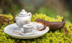 bagaimana cara tepat menikmati teh herbal