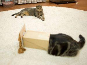 cara mengajari anak bermain dengan kucing