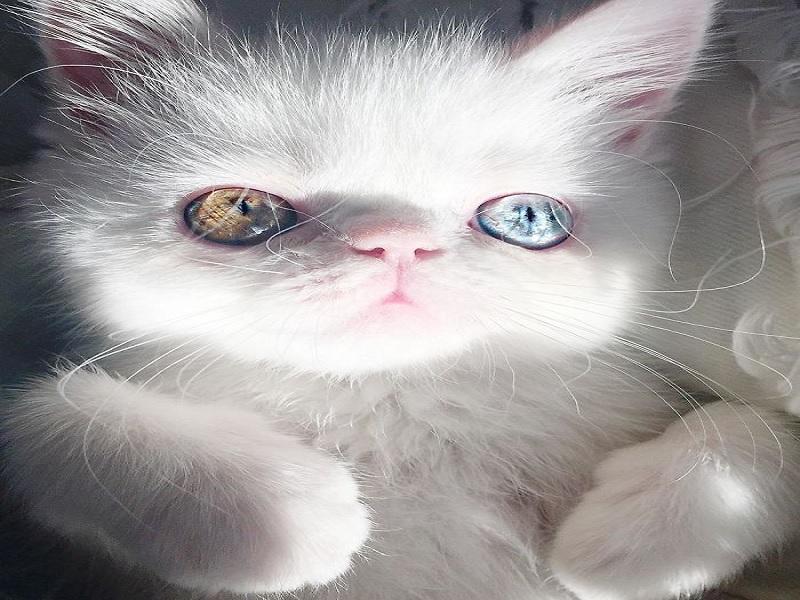 penyebab umum Heterochromia yang harus diwaspadai