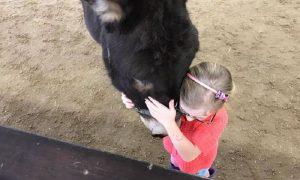 terapi dengan binatang untuk penderita cerebral palsy