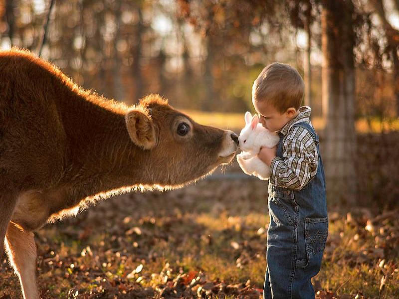 keuntungan mendidik anak di lingkungan peternakan