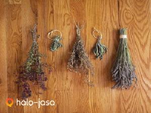 cara mengawetkan herbal tanpa mengurangi khasiatnya