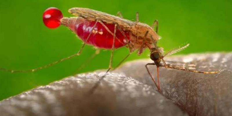 Gigitan nyamuk yang terasa gatal