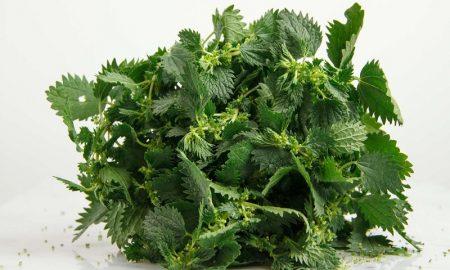 herbal tinggi zat besi untuk puasa