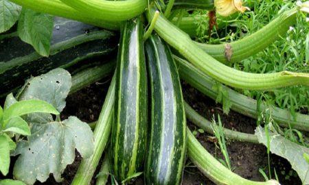 sayuran yang mencegah dehidrasi saat puasa