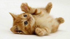 yang wajib diketahui oleh para pecinta kucing