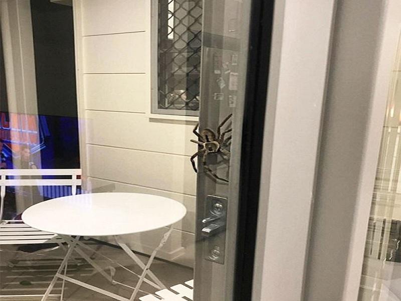 gejala akibat gigitan laba laba beracun