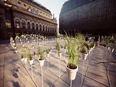 herbal aneh yang mungkin tidak tumbuh