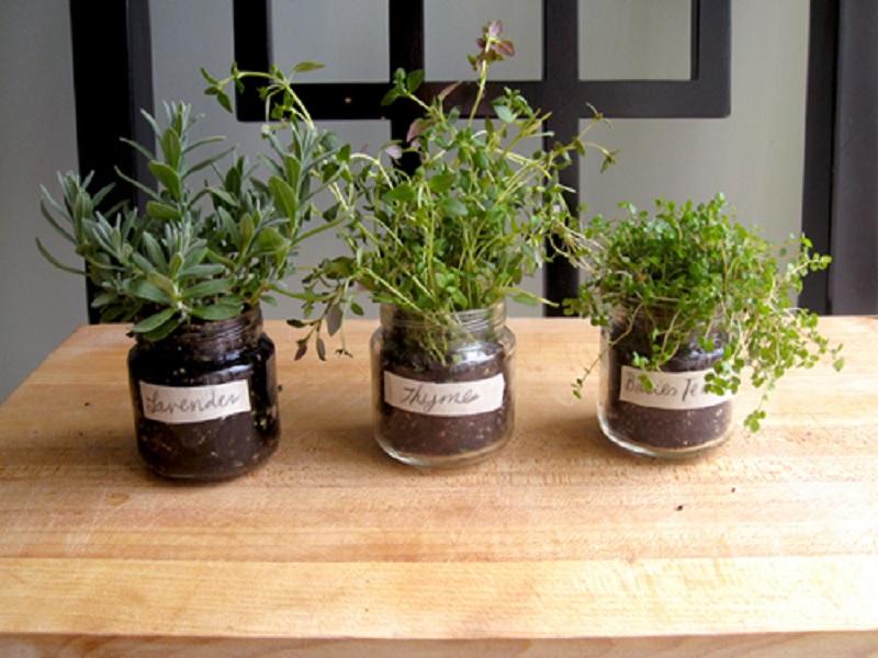 herbal yang bisa dikenalkan untuk makanan bayi