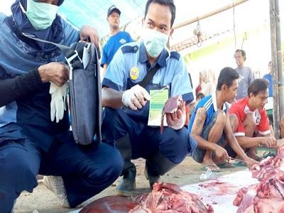 bahaya mengkonsumsi daging yang terinfeksi