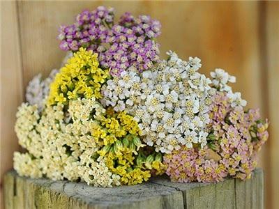 bunga herbal indah dengan berbagai warna