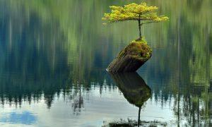 pelajaran penting untuk tidak menyerah seperti pohon