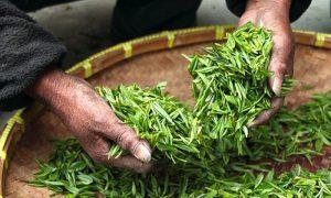 jenis tanaman pekarangan yang bisa digunakan sebagai obat