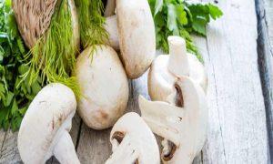 diet menurunkan berat badan dengan jamur