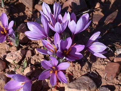 herbal cantik seperti bunga hias