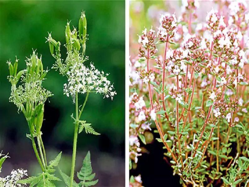 herbal penyembuh ajaib yang jarang digunakan