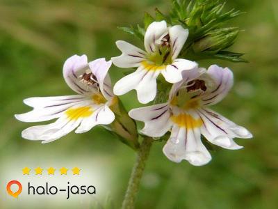 Herbal yang Membuat Mata Cerah